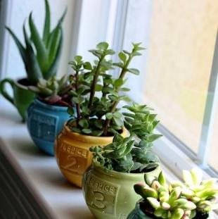 Plante Rezistente La Intuneric Da Exista